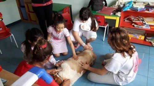 a-firenze-il-cane-serena-accompagna-i-bambini-in-sala-operatoria-e-li-aspetta-al-risveglio