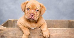 i-cani-aiutano-i-bambini-a-rafforzare-il-sistema-immunitario-e-a-combattere-le-allergie