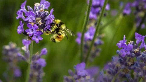 consigli-contro-punture-api-e-vespe