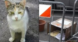 mamma-gatta-vuole-allattare-solo-in-strada-il-comune-transenna-larea