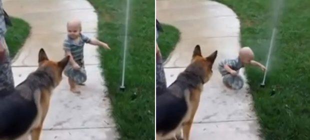 insegna-al-suo-cane-a-non-avere-paura-dell'acqua:-il-dolcissimo-video-diventa-virale