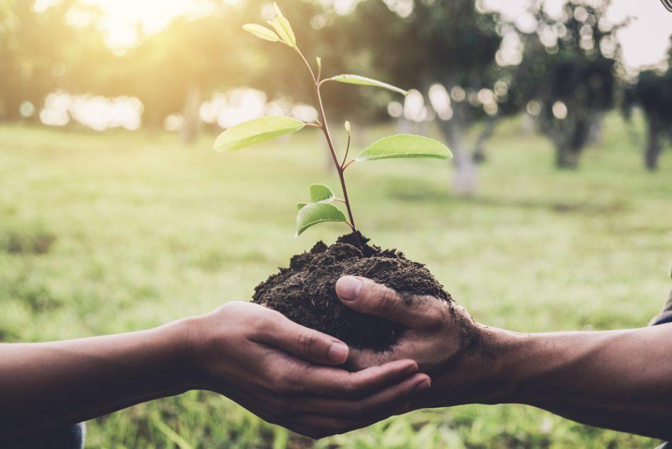 un-albero-per-ogni-bambino-mai-nato-liniziativa-di-milano