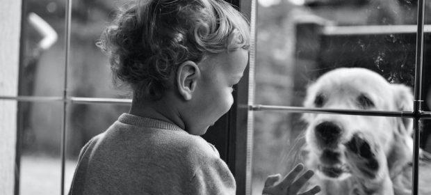 cosa-fare-se-il-bambino-ha-paura-degli-animali